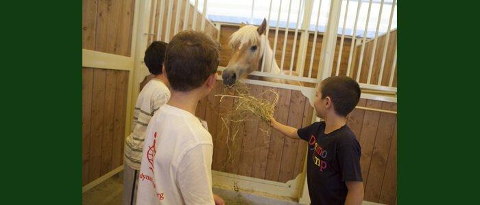 La miglior scelta per i nostri cavalli